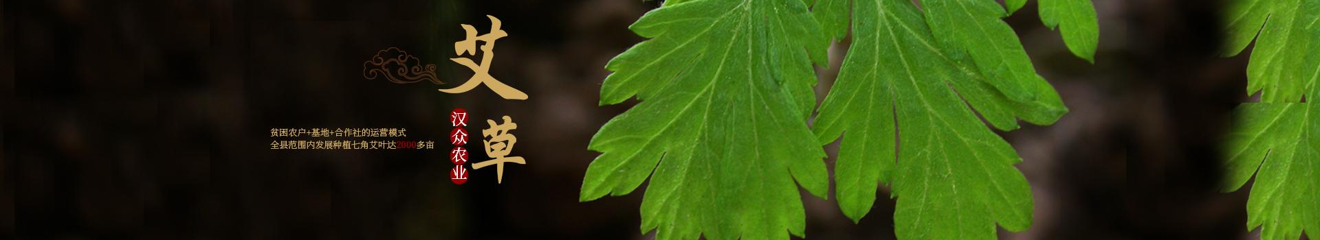 湖南必威体育最新版下载农业发展有限公司_怀化天然七角艾草植物种植|怀化艾制品制造销售