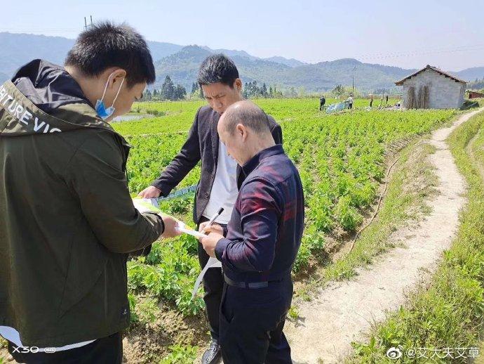 湖南必威体育最新版下载农业发展有限公司,怀化天然七角艾草植物种植,怀化艾制品制造销售